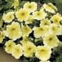 Petunia - Prism Sunshine