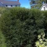 Buckthorn - Fine Line