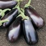 Eggplant - Classic