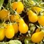 Tomato - Yellow Pear
