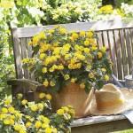 Lantana - Evita Yellow